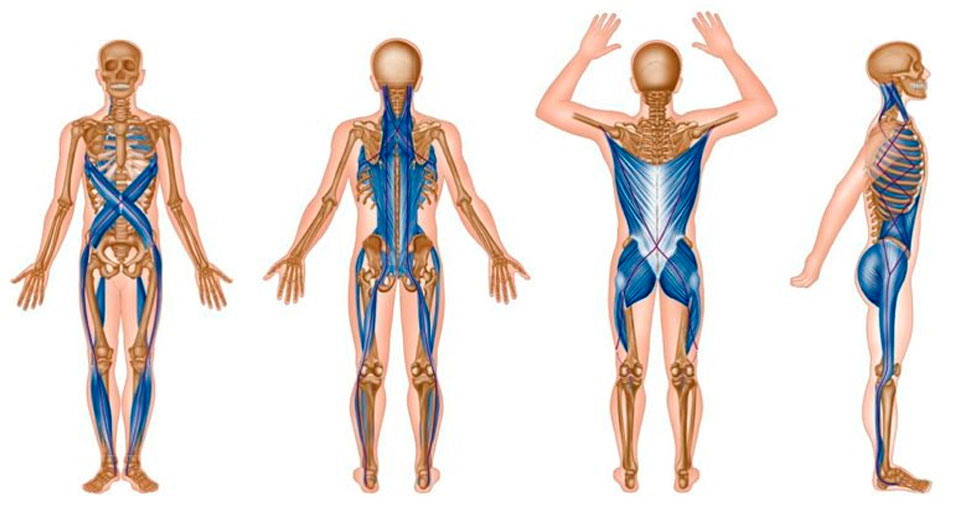 Miofascial - Anayca - Centro de belleza y bienestar - Centro pilates Pili Gordo - Tratamientos de Estética Corporal
